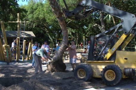 palm planting